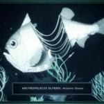 lanternfish_copy