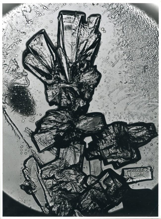 Alfred Ehrhardt   Klargeformte Kristalle des Vitamin C (wässrige Lösung) 1939, Silbergelatinepapier © VG Bild-Kunst, Bonn 2010