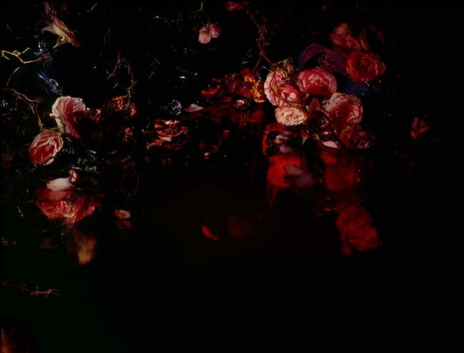 Margriet Smulders »Bloody Roses« 2007