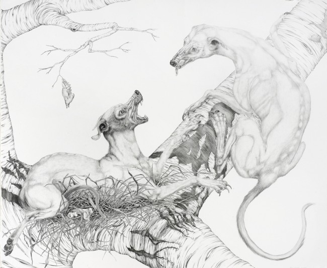 Arboreal Dogs: Unconditional Love (Breeding Pair of Rare Silver Coloration), Graphite on paper, 27 x 32 3/8 inches framed, 2007