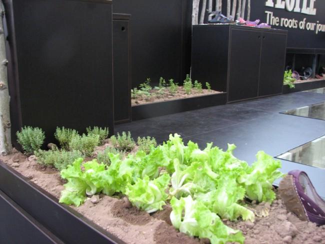 ... samt gepflanzten Kräutern und Salat