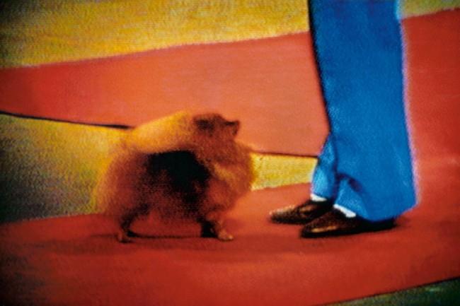 Harry Gruyaert: »N°8« aus der Serie »TV Shots« (1972)