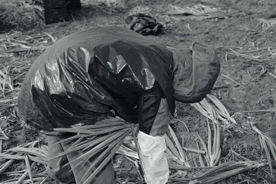 Michael Schmidt | Ohne Titel, # 175, aus: LEBENSMITTEL, 2006–2010, Fotografie, 54,1 x 81,8 cm