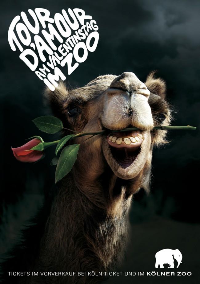 KR_120116_KoelnerZoo_camel