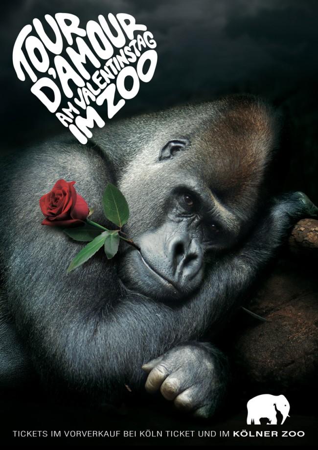 KR_120116_KoelnerZoo_gorilla