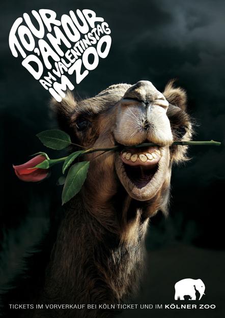 Bild Tour D'Amour Kölner Zoo Kampagne