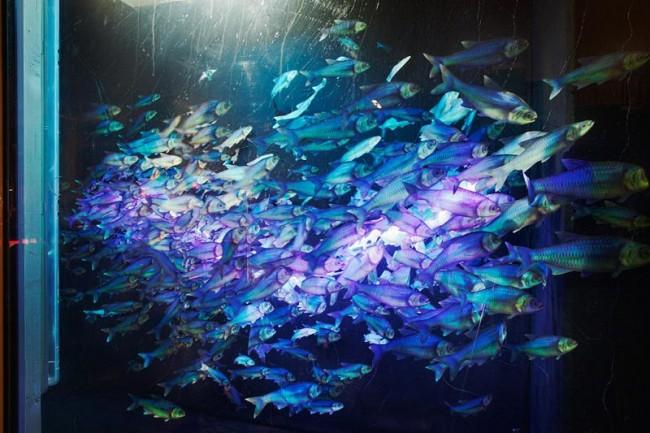 Aquarien Meyer, gestaltet von: Christopher Supardjo