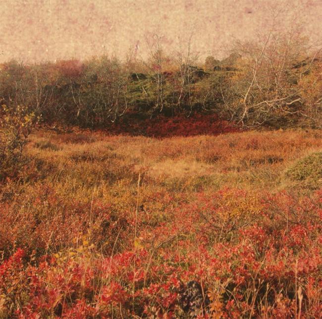 Culte 1 | Strangehalos, David Delander