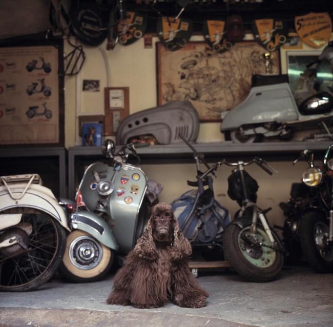 Shop & Dog