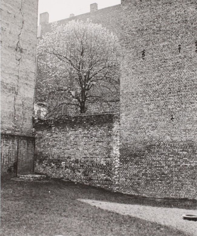 Manfred Paul: Eingemauerte Kastanie, Kastanienallee, 1985
