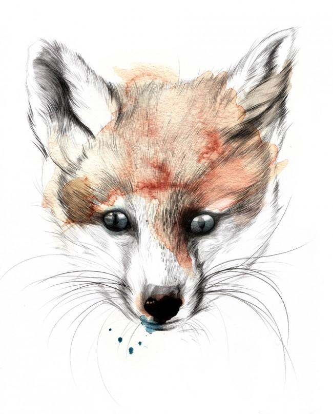 Renard | Fuchs