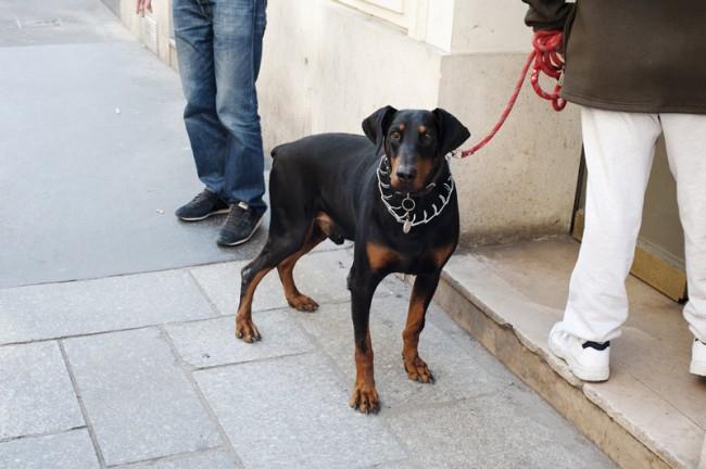 KR_130619_Pariser_Hunde_DSC0107