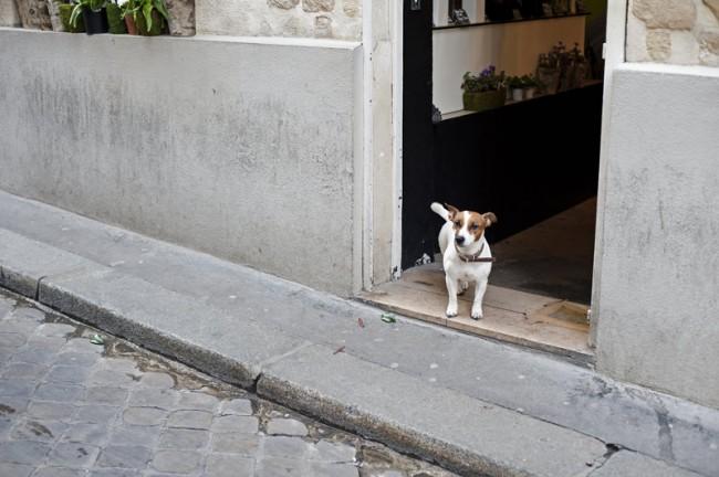 KR_130619_Pariser_Hunde_DSC9488