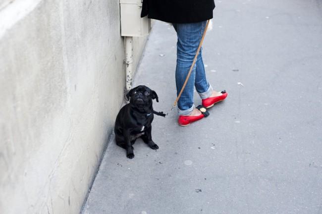 KR_130619_Pariser_Hunde_DSC9504