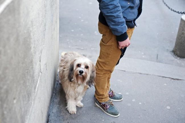 KR_130619_Pariser_Hunde_DSC9509