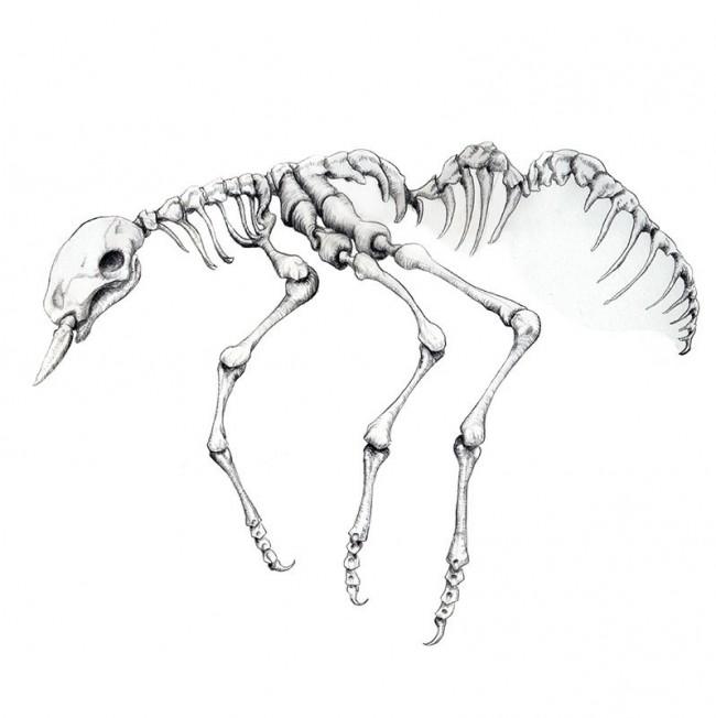 Animals - Ant