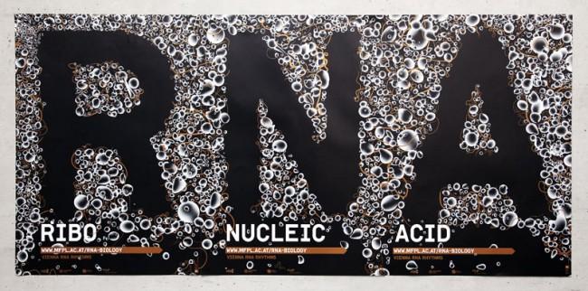 mfpl RNA | Max F. Perutz Laboratories RNA