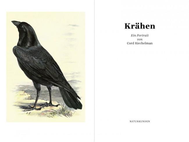 KR_130731_Kraehen_02