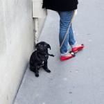content_size_KR_130619_Pariser_Hunde_DSC9504