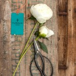 content_size_KR_130729_Floralia