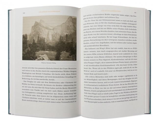 »Die Berge Kaliforniens« von John Muir: Band 2 der Buchreihe »Naturkunden«, herausgegeben von Judith Schalansky bei Matthes & Seitz Berlin