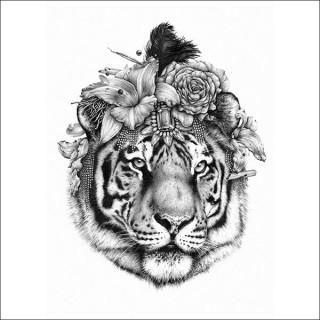 Ugo Gattoni, Tiger
