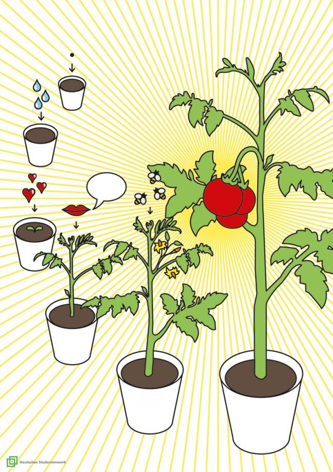 Berenice Gaß »Iss dein eigenes Gemüse« | Staatliche Akademie der Bildenden Künste Stuttgart