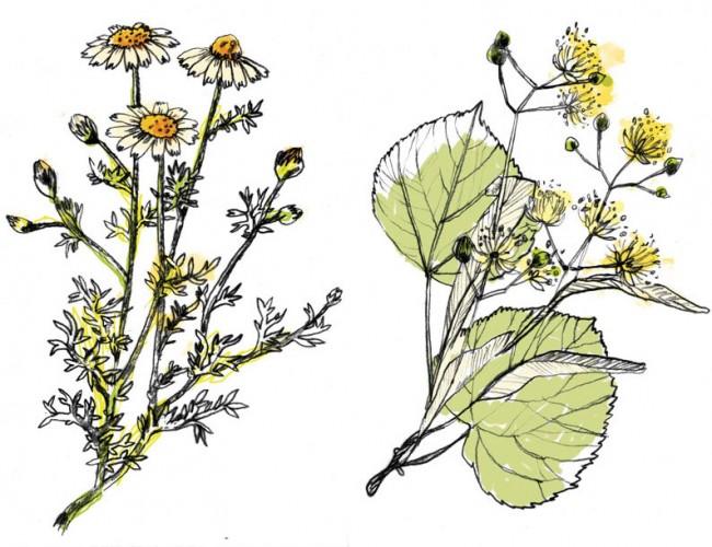 Flora 1, BBMOM