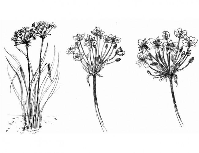 Flora 2, Verbund