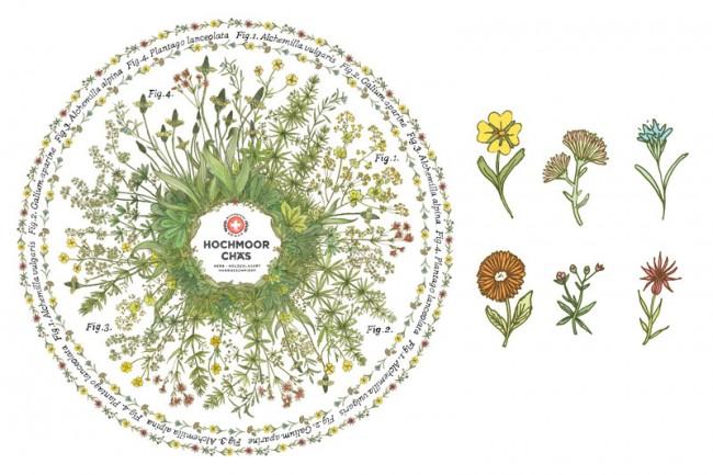 Flora 3, Hochmoor Chäs