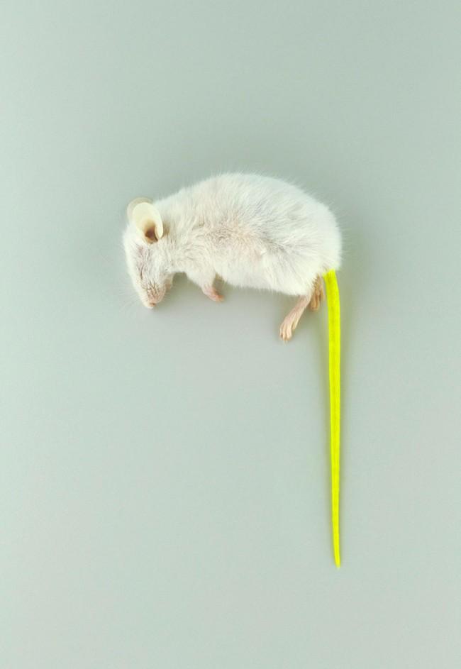 Mouse Fluor