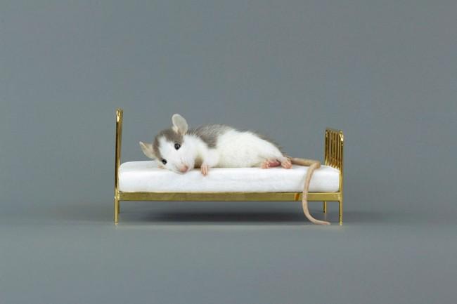 Rat Bed