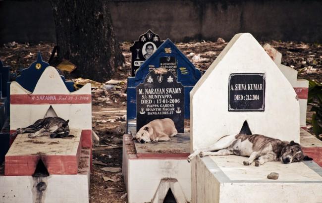 Entspannung auf einem Friedhof in Bangalore