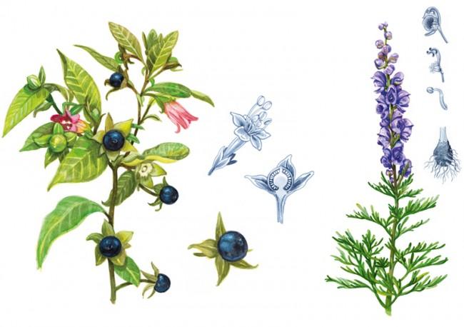 Werde - Heilpflanzengarten