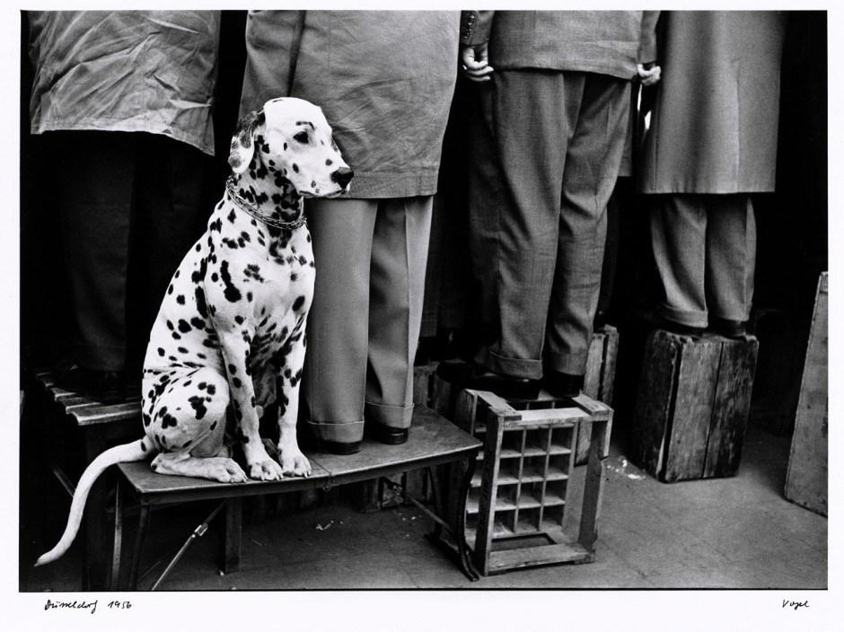 Walter Vogel: Dalmatiner ... Kein Interesse an Fußball, Düsseldorf 1956