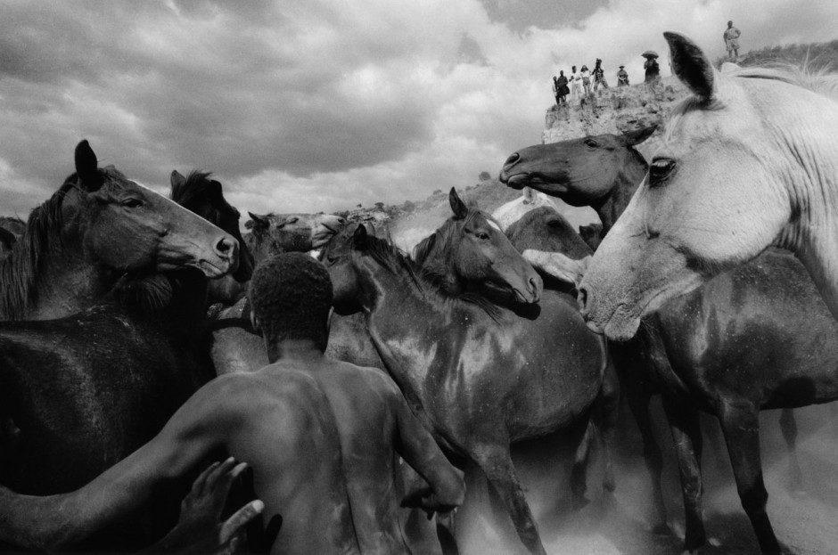 Ulrich Mack: Wildpferde in Kenia, 1964