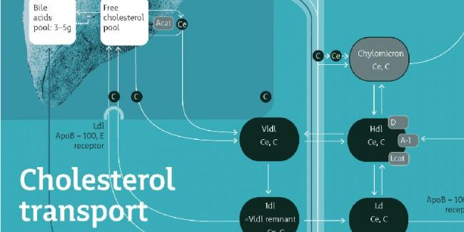 Infografik / Biochemie, Schrift »Mir«