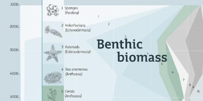 Infografik / Meeresbiologie, Schrift »Mir«