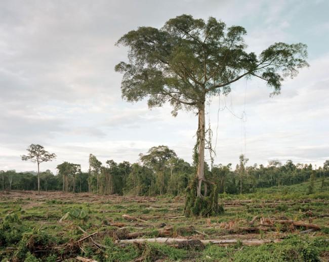 Deforestation Central Kalimantan, 2012