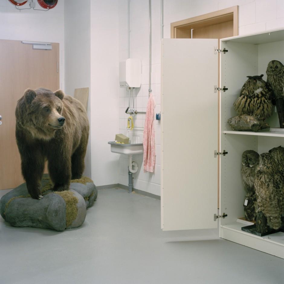 Bär mit Eulen - aus der Serie Tierpräparate im Museum fürNaturkundeChemnitz