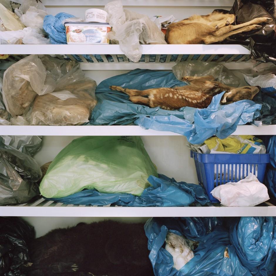 Gefrierschrank- aus der Serie Tierpräparate imMuseum fürNaturkundeChemnitz