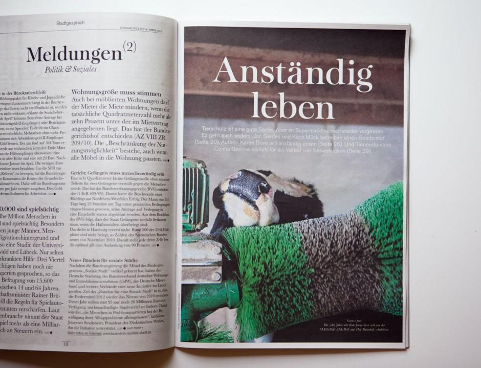 Anständig Leben - Reportage über das Kuhaltersheim und den Gnadenhof Butenlandfür das Hamburger Hinz und Kunzt Magazin