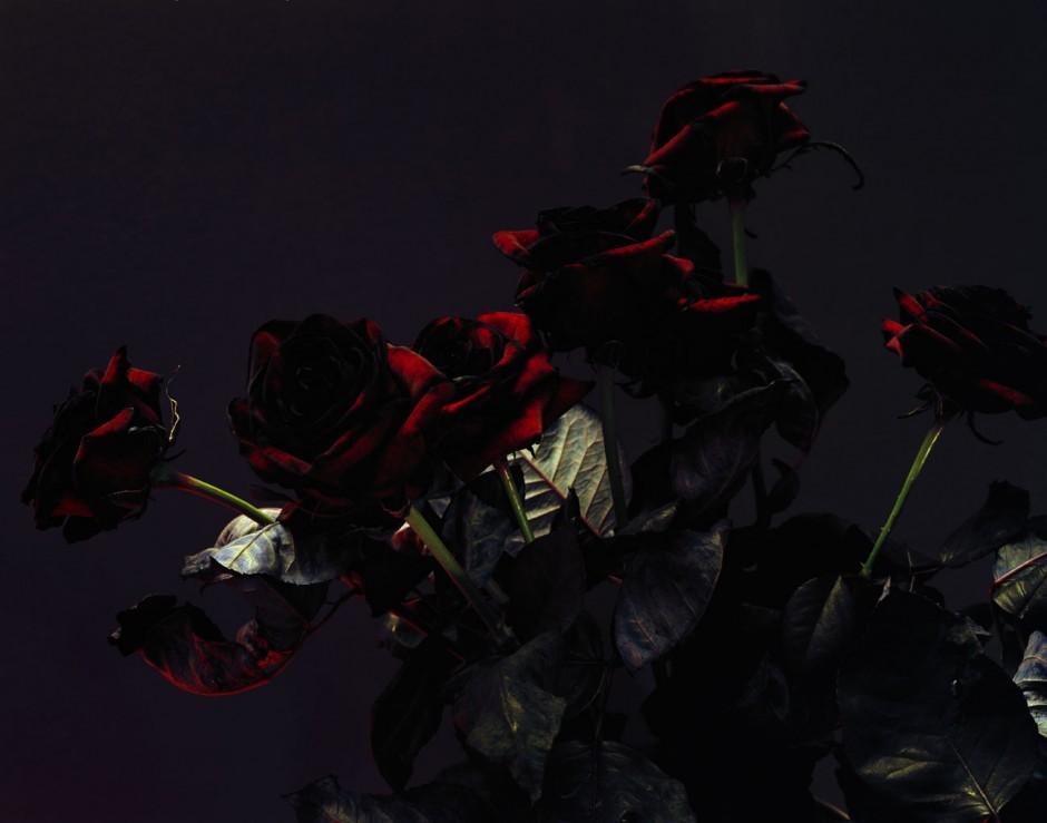 © Ralph Mecke, Still life of black roses, Paris, 2005