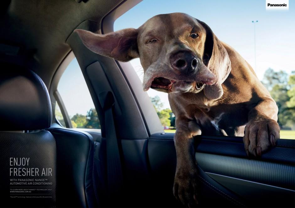 Confused Dog, Australien, in Auftrag gegeben von Panasonic, Nanoe Automotive Technology ausgezeichnet als Bronze Lion Campaign, 2014