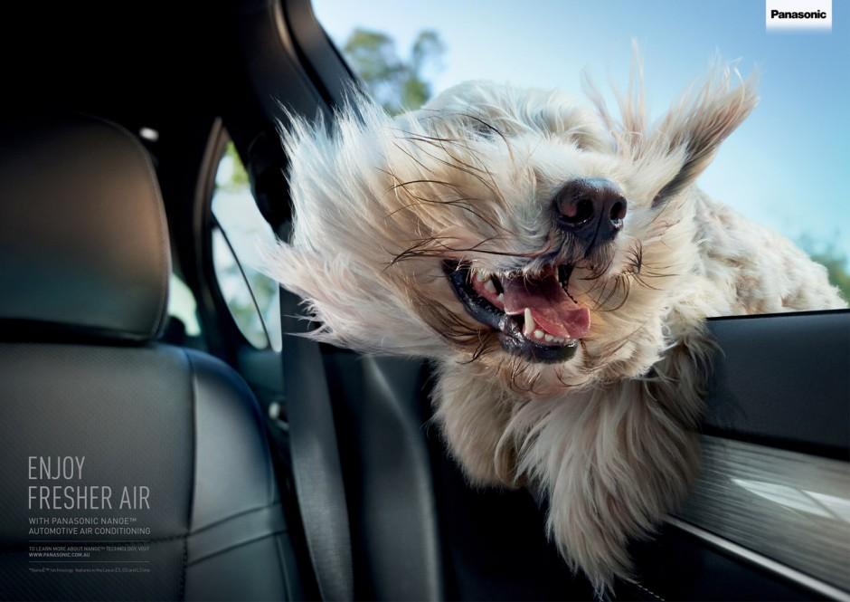 Windblown Dog, Australien, in Auftrag gegeben von Panasonic, Nanoe Automotive Technology ausgezeichnet als Bronze Lion Campaign, 2014