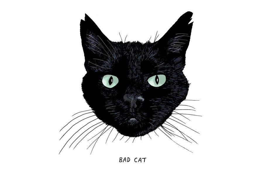 Illustriertes Buch über die Einzigartigkeit jeder schwarzen Katze
