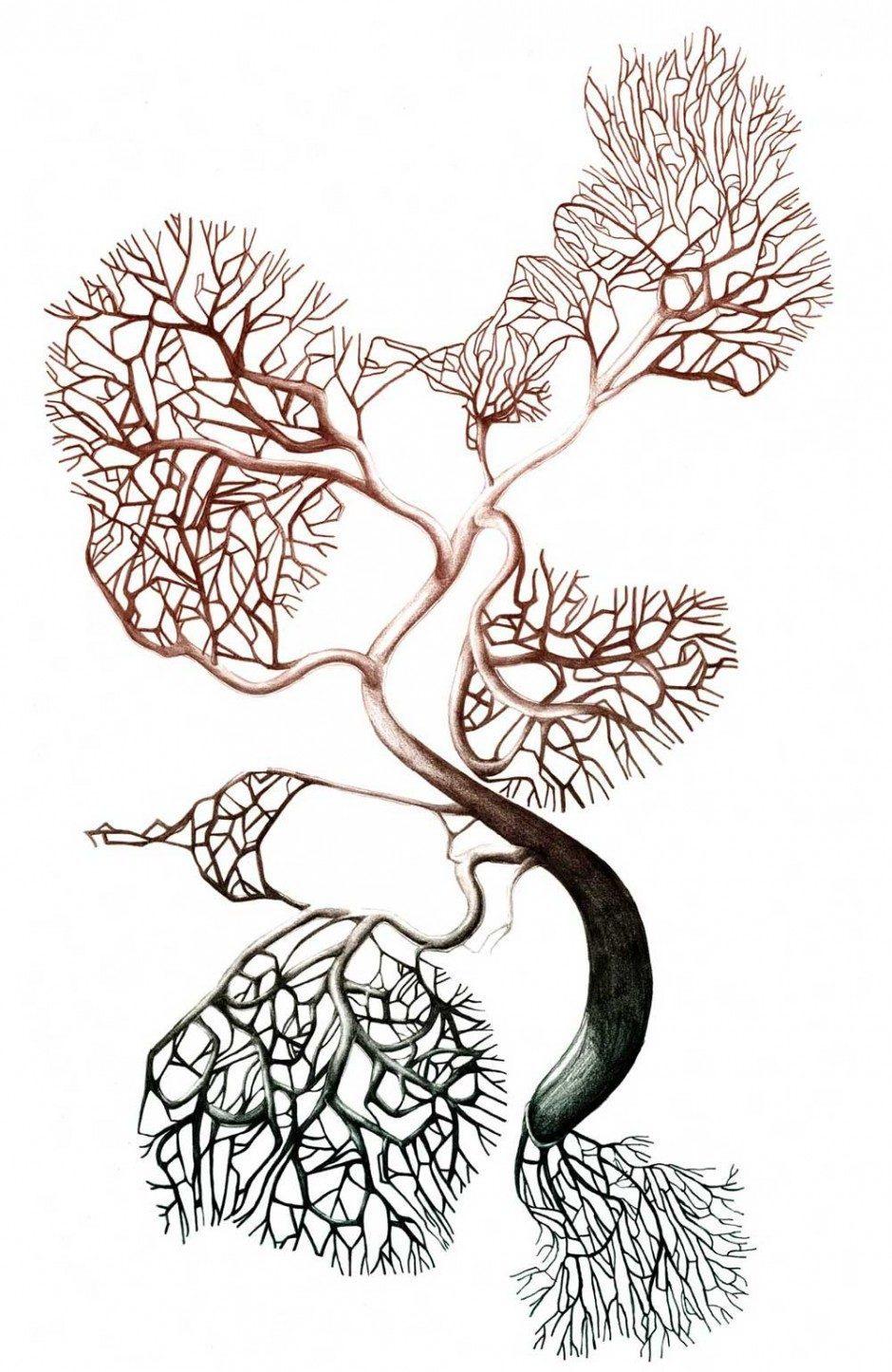 Mikroorganismus Fungus Dementia