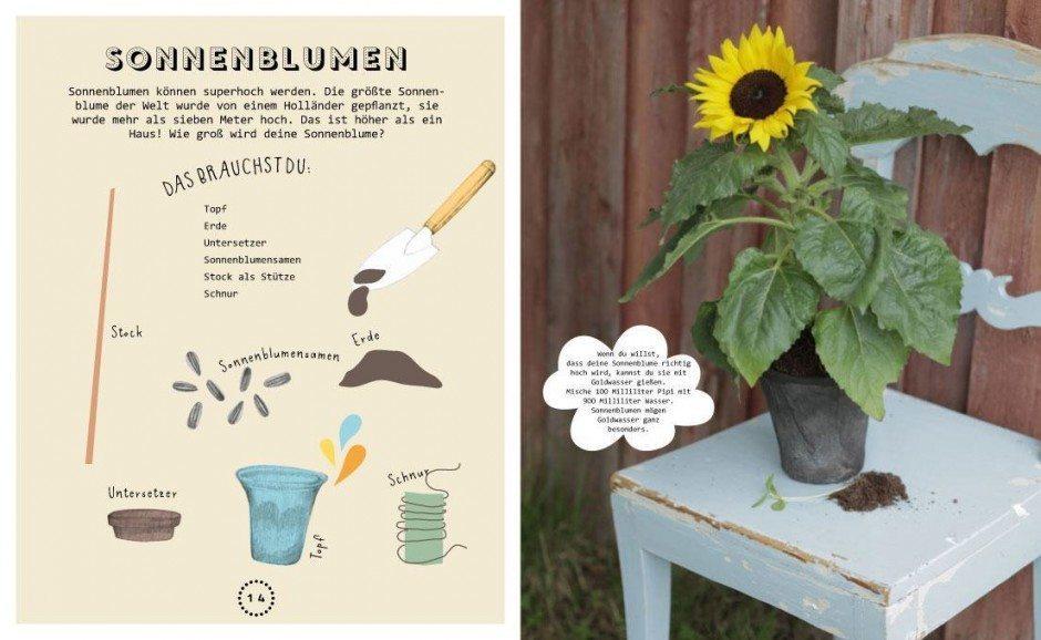 mit Illustrationen von Katy Kimbell & Li Söderberg