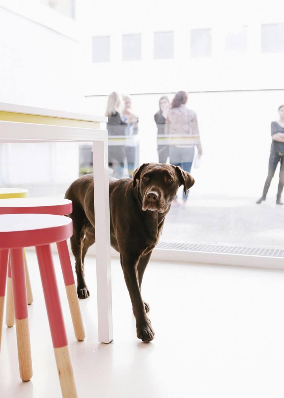 Bürohund Elly
