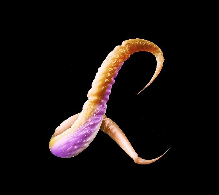Appendix1